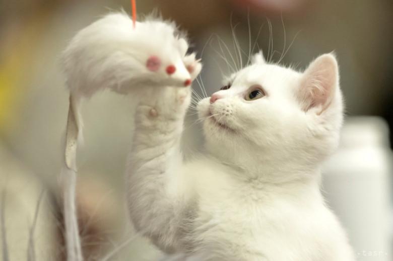 krásne šírenie mačička pics